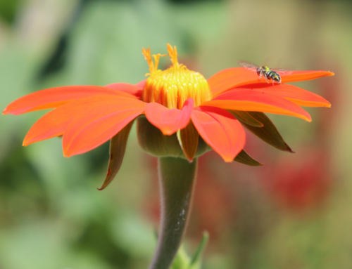 Are there fewer pollinators and other insects this year in your yard?