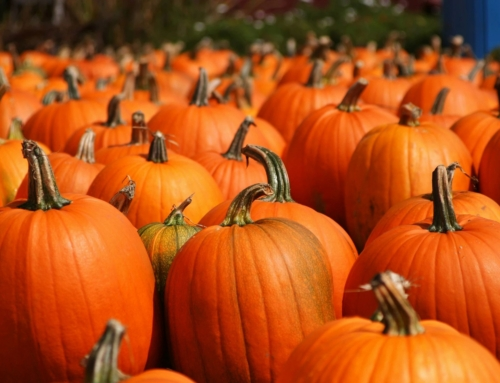 Rooster Head Farms wants your pumpkins